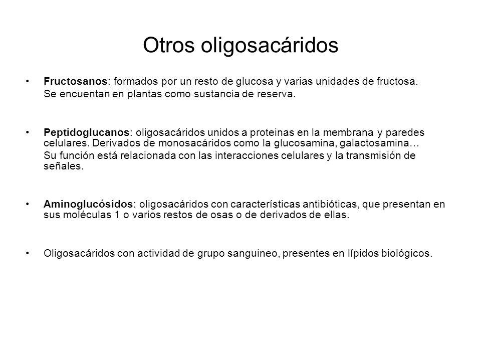 Otros oligosacáridos Fructosanos: formados por un resto de glucosa y varias unidades de fructosa. Se encuentan en plantas como sustancia de reserva.