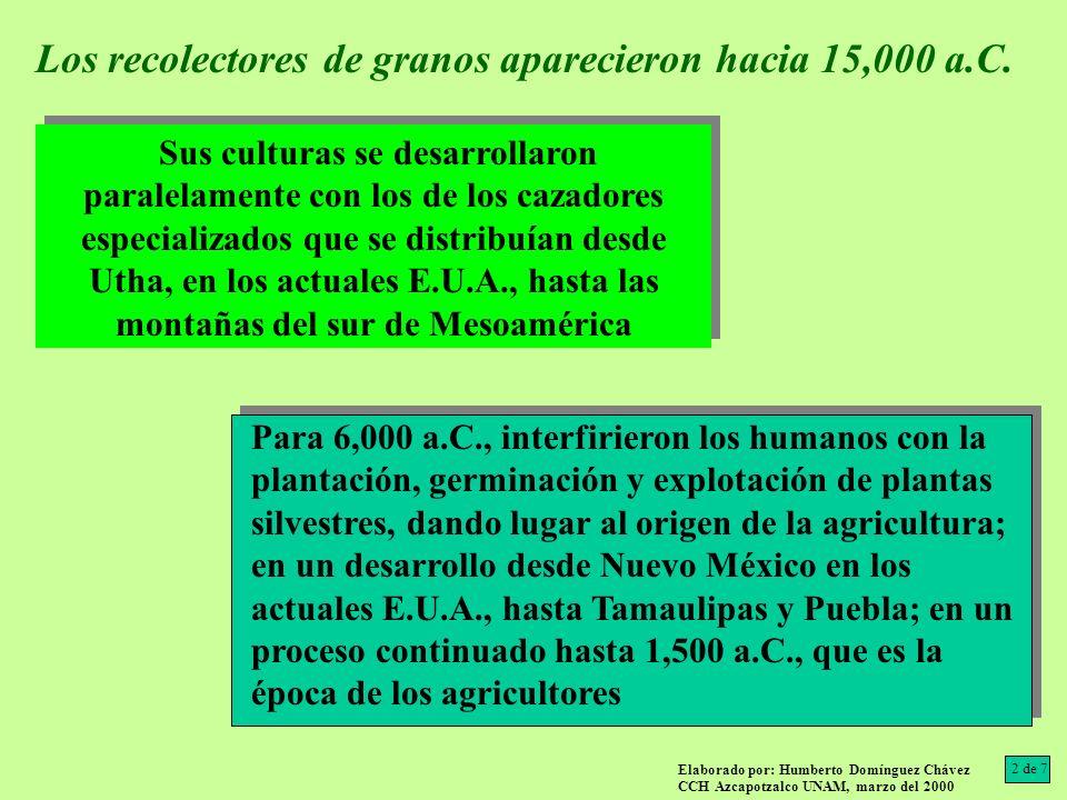 Los recolectores de granos aparecieron hacia 15,000 a.C.