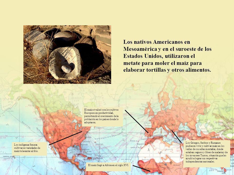 Los nativos Americanos en Mesoamérica y en el suroeste de los Estados Unidos, utilizaron el metate para moler el maíz para elaborar tortillas y otros alimentos.