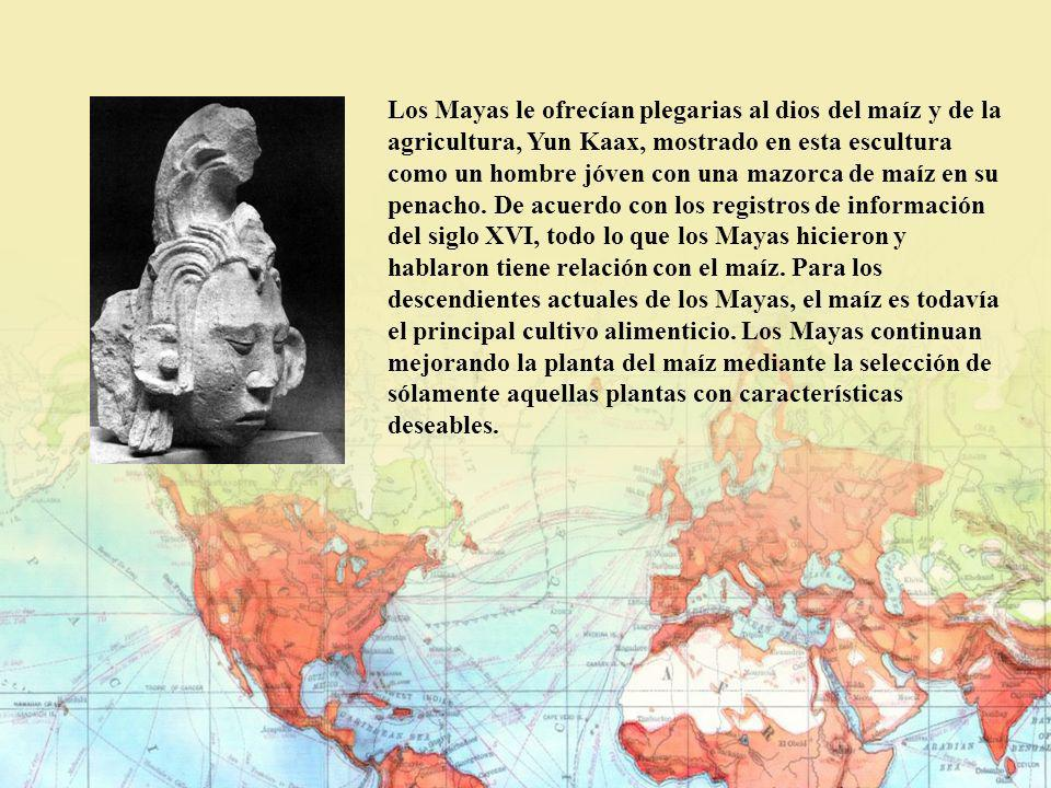 Los Mayas le ofrecían plegarias al dios del maíz y de la agricultura, Yun Kaax, mostrado en esta escultura como un hombre jóven con una mazorca de maíz en su penacho.
