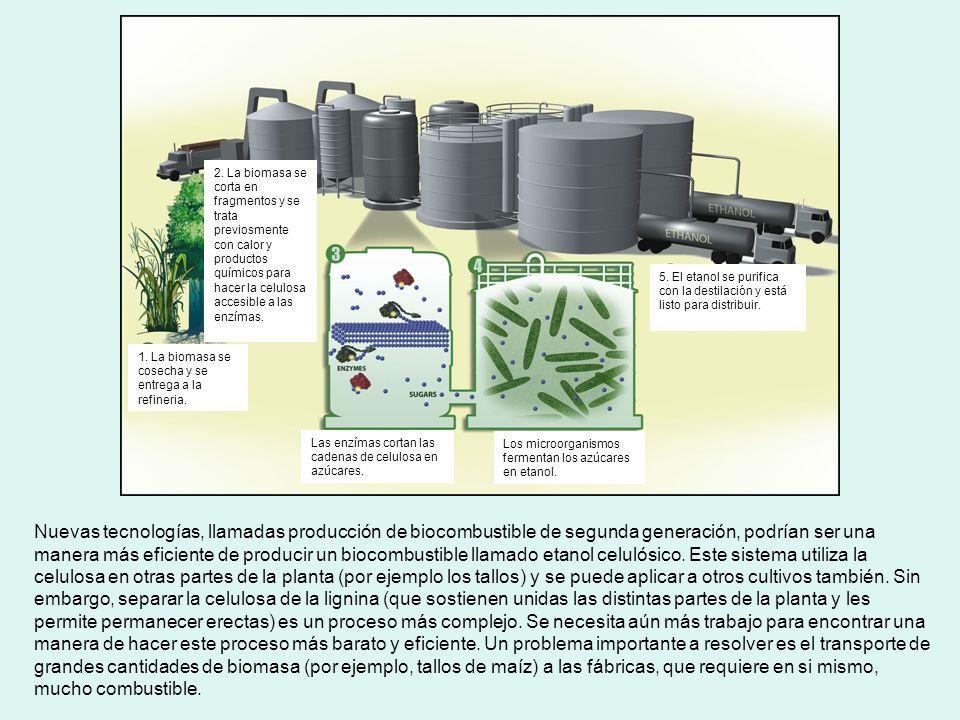 2. La biomasa se corta en fragmentos y se trata previosmente con calor y productos químicos para hacer la celulosa accesible a las enzímas.