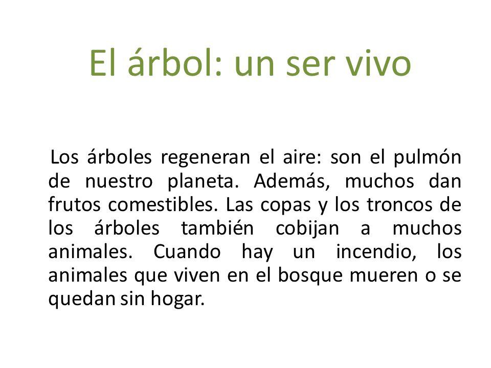 El rbol un ser vivo los rboles regeneran el aire son for Cuales son los arboles perennes
