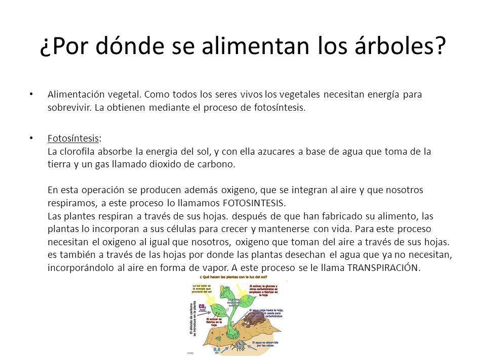 El rbol un ser vivo los rboles regeneran el aire son for Arboles que no pierden sus hojas en otono