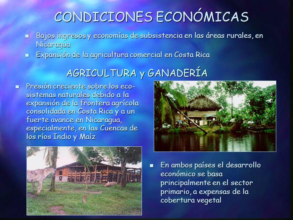 CONDICIONES ECONÓMICAS