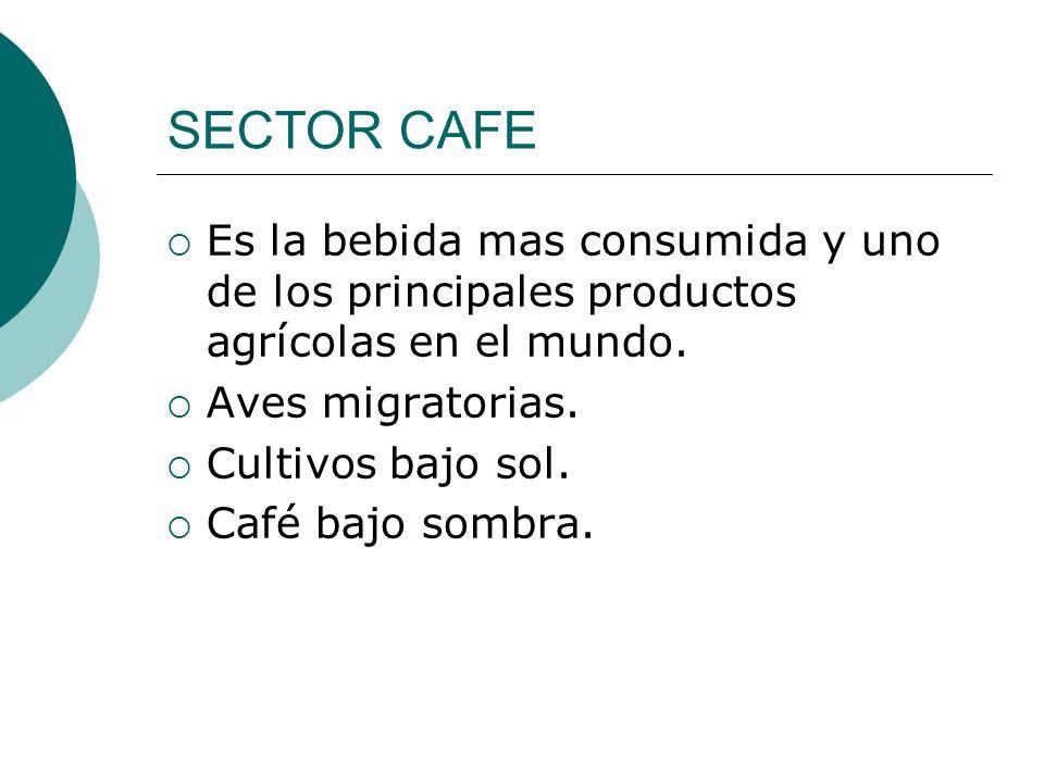 SECTOR CAFE Es la bebida mas consumida y uno de los principales productos agrícolas en el mundo. Aves migratorias.