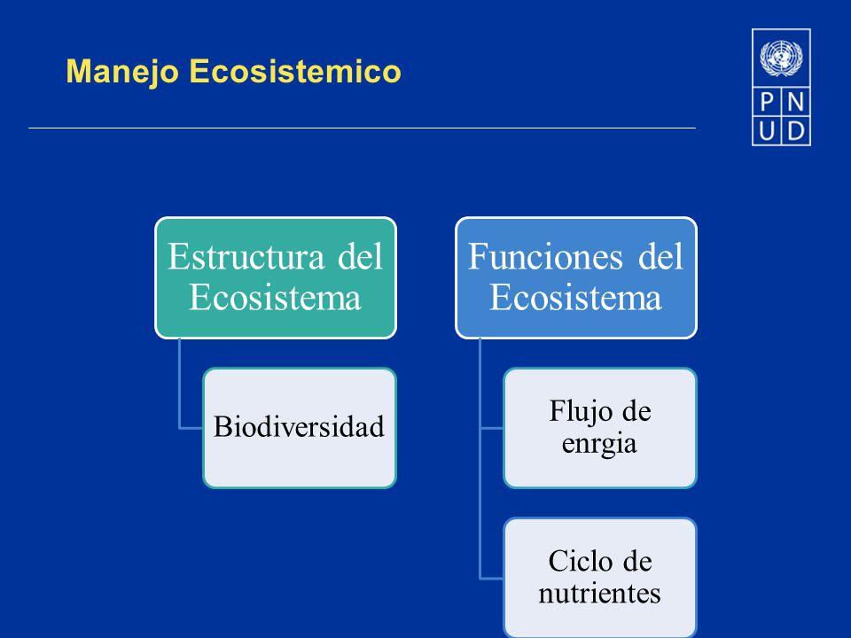 Manejo Ecosistemico Estructura del Ecosistema Biodiversidad