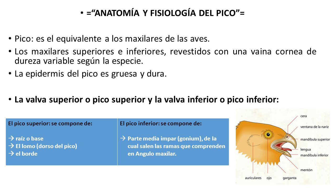 Lujoso La Imagen De La Anatomía De La Garganta Festooning - Imágenes ...