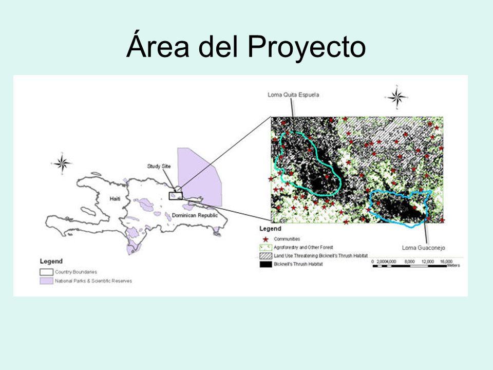 Área del Proyecto