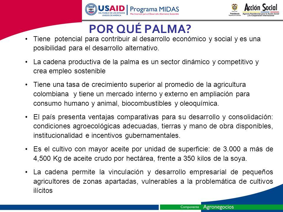 POR QUÉ PALMA Tiene potencial para contribuir al desarrollo económico y social y es una posibilidad para el desarrollo alternativo.