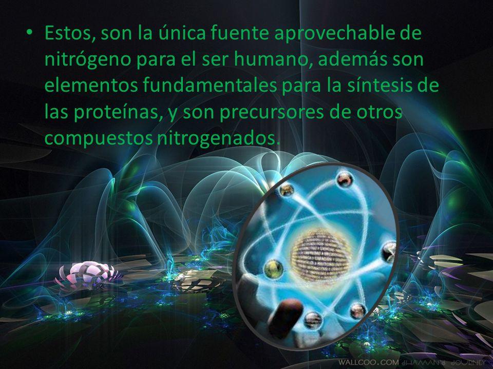 Estos, son la única fuente aprovechable de nitrógeno para el ser humano, además son elementos fundamentales para la síntesis de las proteínas, y son precursores de otros compuestos nitrogenados.