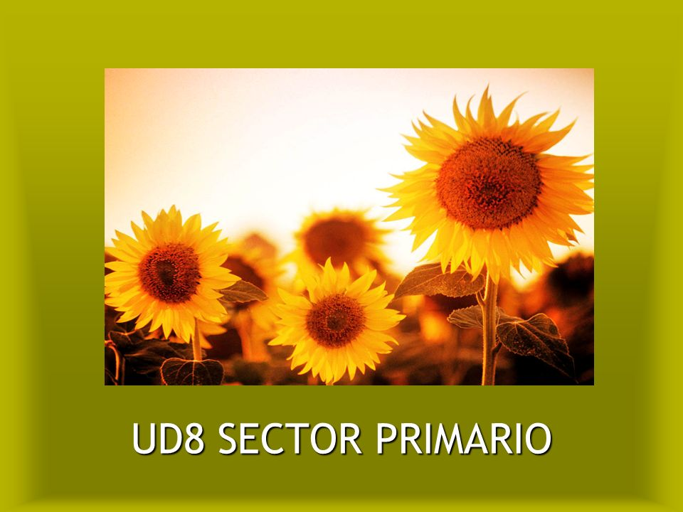 UD8 SECTOR PRIMARIO