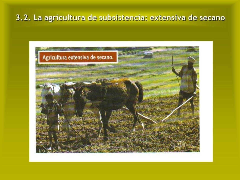 3.2. La agricultura de subsistencia: extensiva de secano