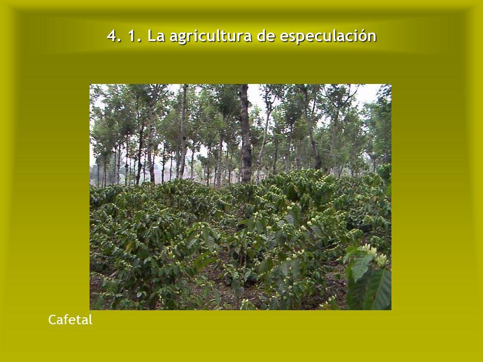 4. 1. La agricultura de especulación
