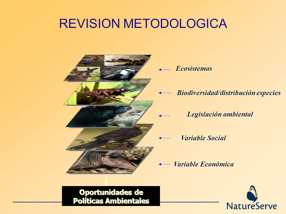 REVISION METODOLOGICA