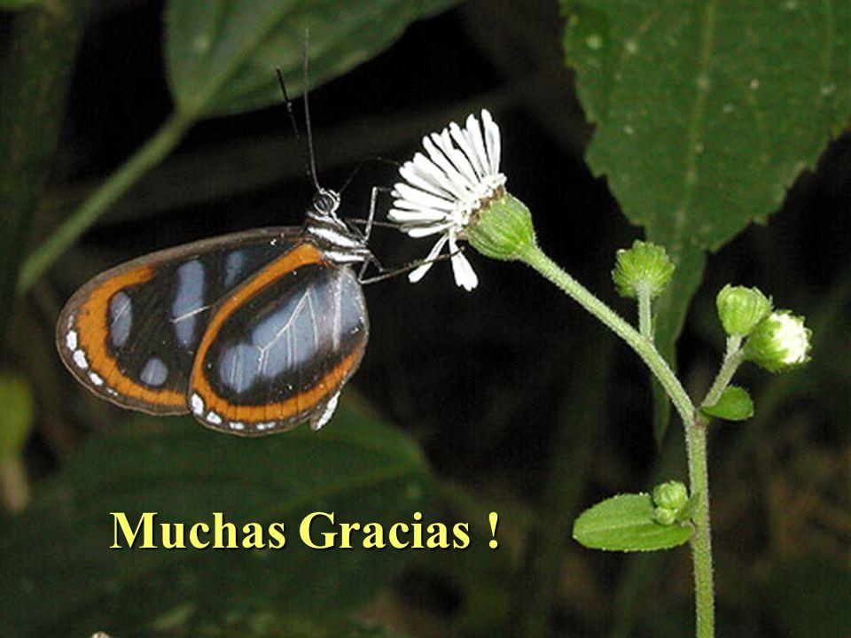 Muchas Gracias !