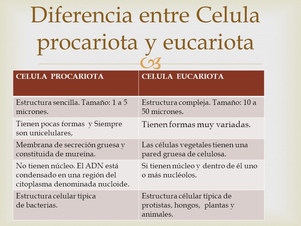Celula Eucariota Y Procariota Diferencias Diferencia