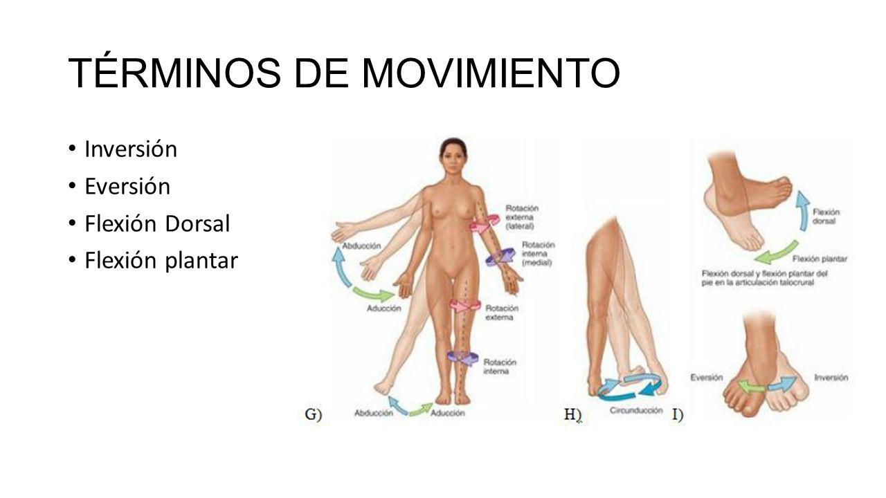 Hermosa Pronación Definición Anatomía Imágenes - Anatomía de Las ...