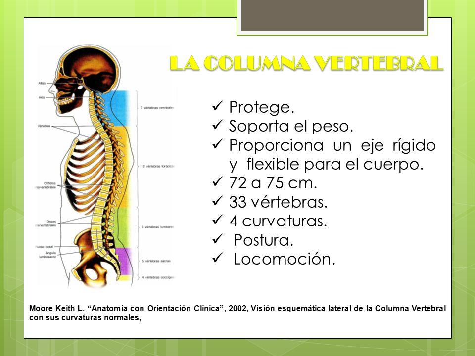 Lujo La Anatomía De La Columna Cervical Vértebras Patrón - Imágenes ...