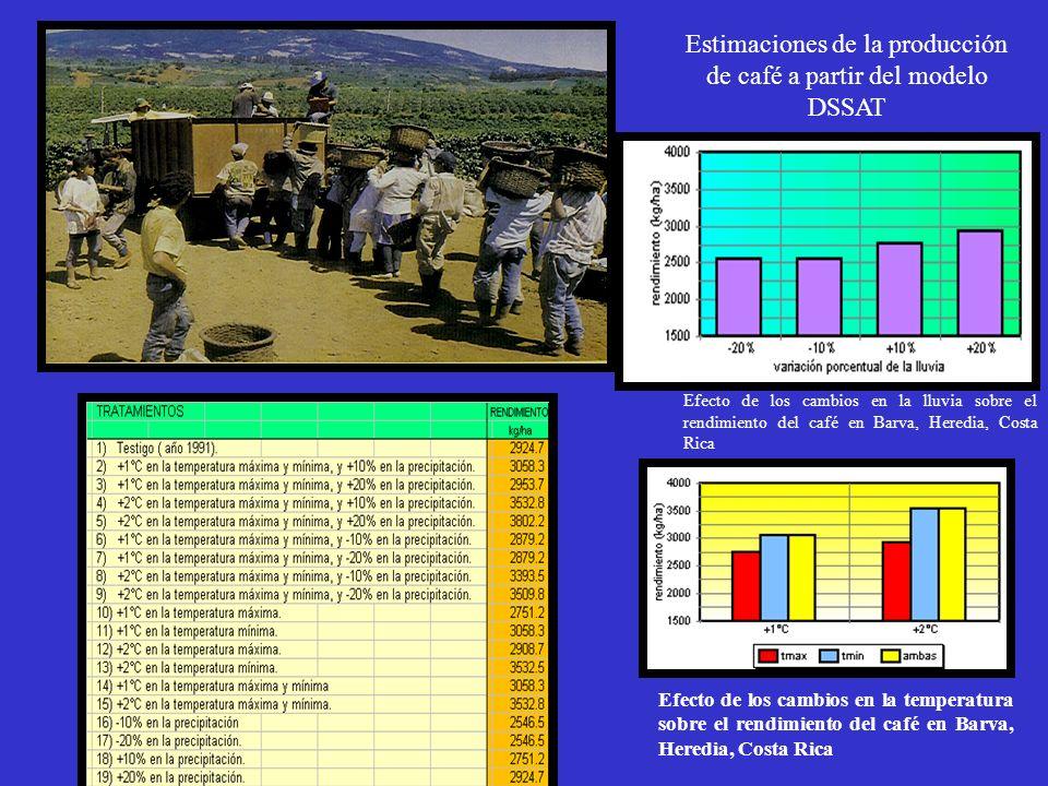 Estimaciones de la producción de café a partir del modelo DSSAT