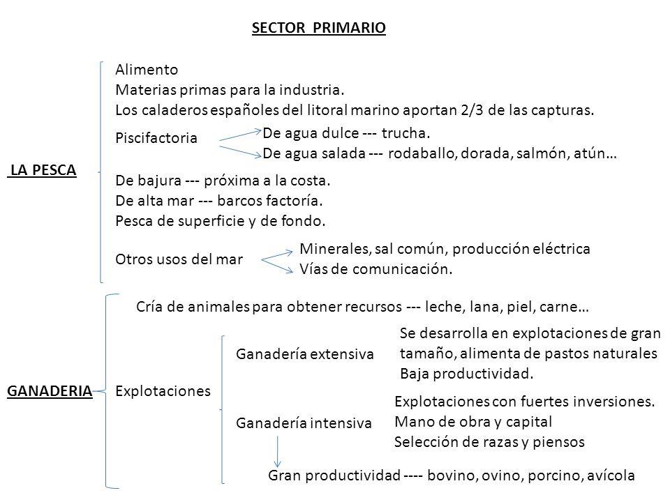 SECTOR PRIMARIO Alimento. Materias primas para la industria. Los caladeros españoles del litoral marino aportan 2/3 de las capturas.
