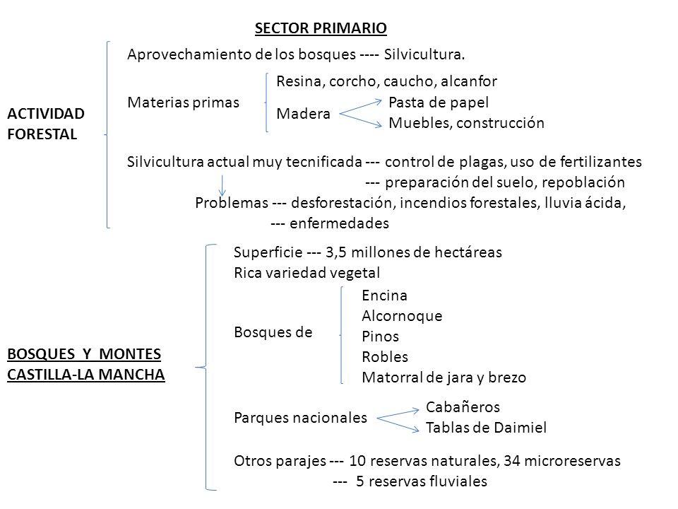 SECTOR PRIMARIO Aprovechamiento de los bosques ---- Silvicultura. Resina, corcho, caucho, alcanfor.