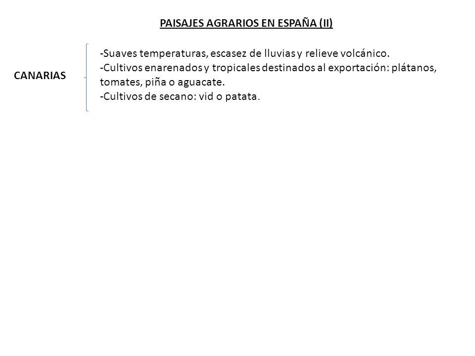 PAISAJES AGRARIOS EN ESPAÑA (II)