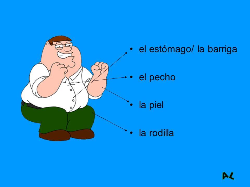 el estómago/ la barriga
