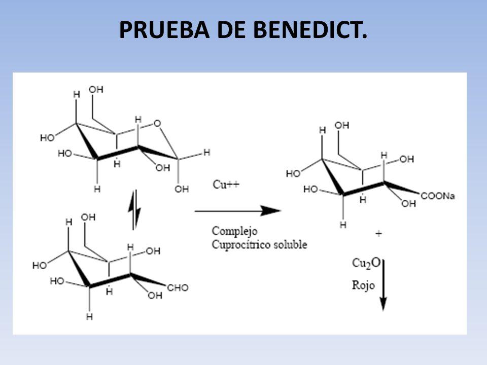 PRUEBA DE BENEDICT.