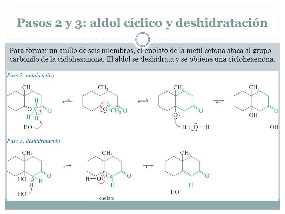 Pasos 2 y 3: aldol cíclico y deshidratación