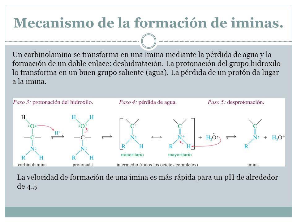 Mecanismo de la formación de iminas.