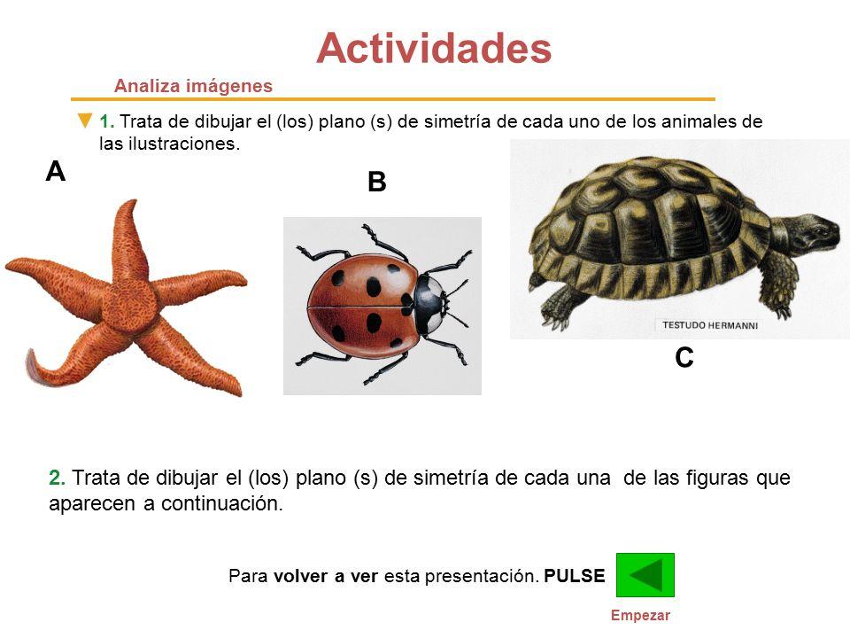 Actividades Analiza imágenes. 1. Trata de dibujar el (los) plano (s) de simetría de cada uno de los animales de las ilustraciones.