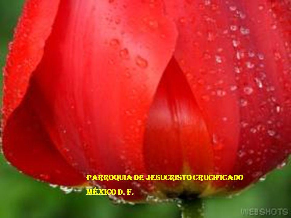 PARROQUIA DE JESUCRISTO CRUCIFICADO