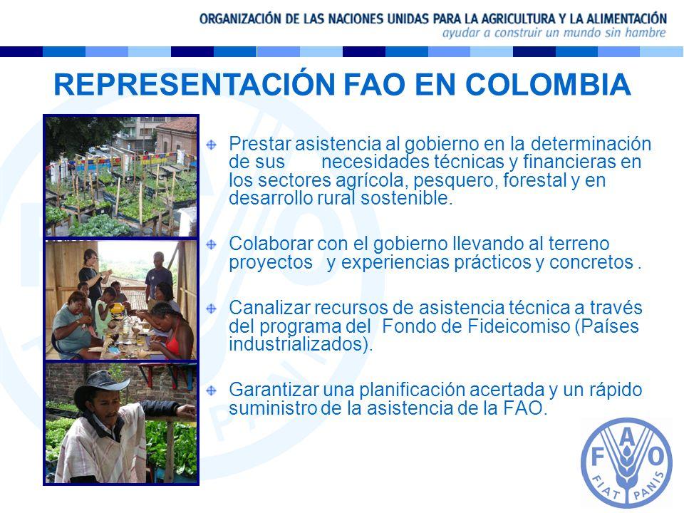 REPRESENTACIÓN FAO EN COLOMBIA