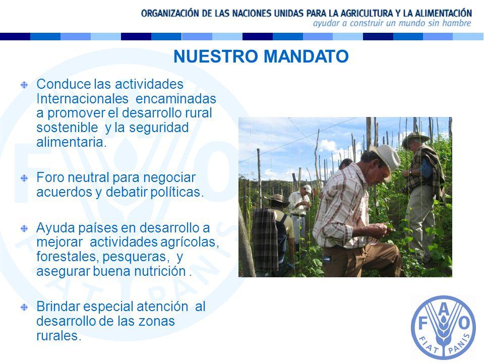 NUESTRO MANDATO Conduce las actividades Internacionales encaminadas a promover el desarrollo rural sostenible y la seguridad alimentaria.