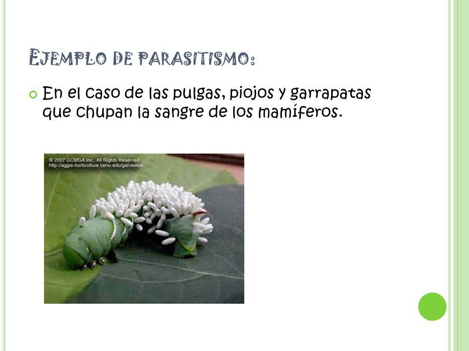 ejemplos de parasitismo ejemplos de parasitismo relaciones ...
