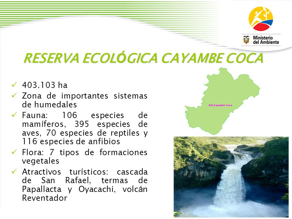 RESERVA ECOLÓGICA CAYAMBE COCA