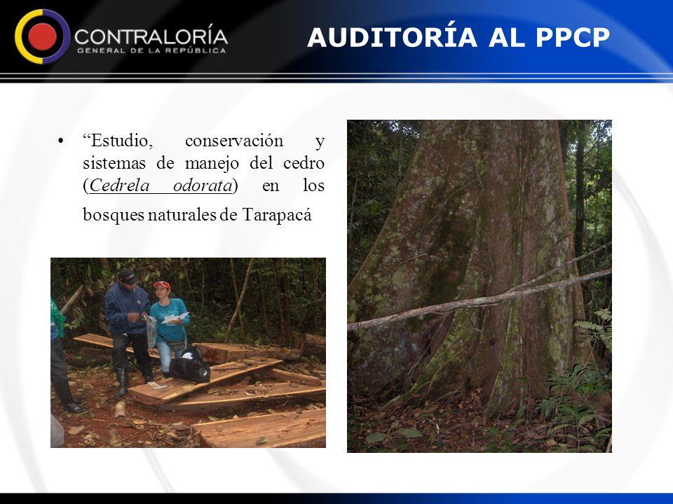 AUDITORÍA AL PPCP Estudio, conservación y sistemas de manejo del cedro (Cedrela odorata) en los bosques naturales de Tarapacá.