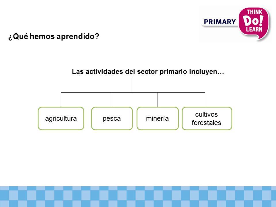 ¿Qué hemos aprendido Las actividades del sector primario incluyen…
