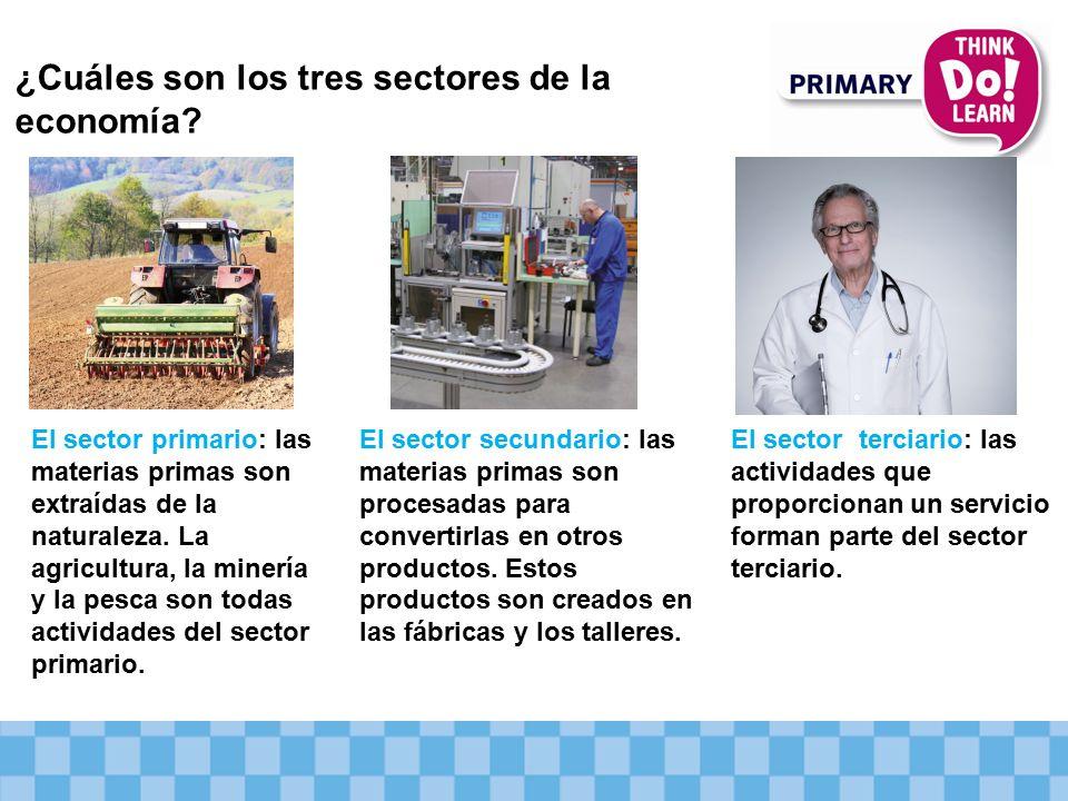 ¿Cuáles son los tres sectores de la economía