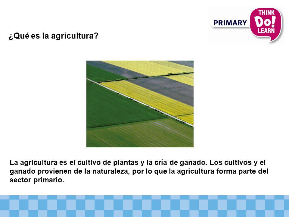 ¿Qué es la agricultura