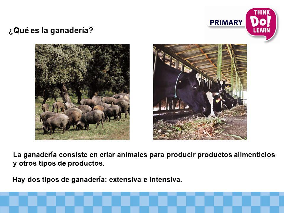 ¿Qué es la ganadería La ganadería consiste en criar animales para producir productos alimenticios y otros tipos de productos.