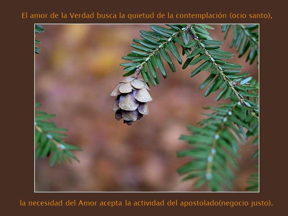 El amor de la Verdad busca la quietud de la contemplación (ocio santo),