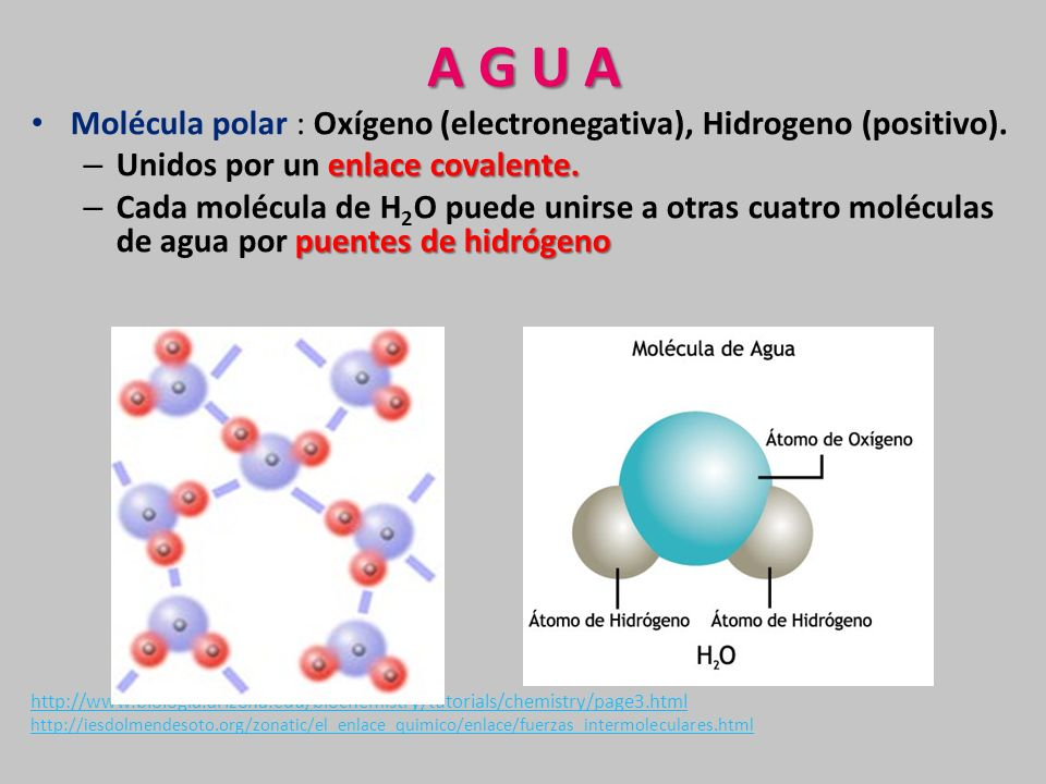 Composici n qu mica de la c lula ppt video online descargar for Composicion quimica del marmol