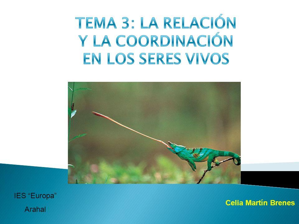 TEMA 3: LA RELACIÓN Y LA COORDINACIÓN EN LOS SERES VIVOS