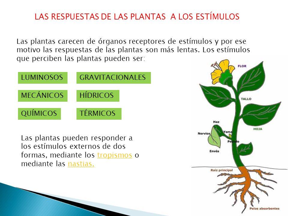 LAS RESPUESTAS DE LAS PLANTAS A LOS ESTÍMULOS