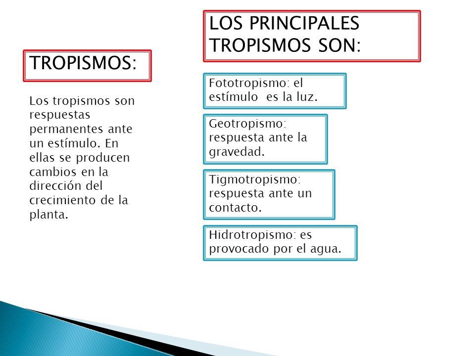 LOS PRINCIPALES TROPISMOS SON: