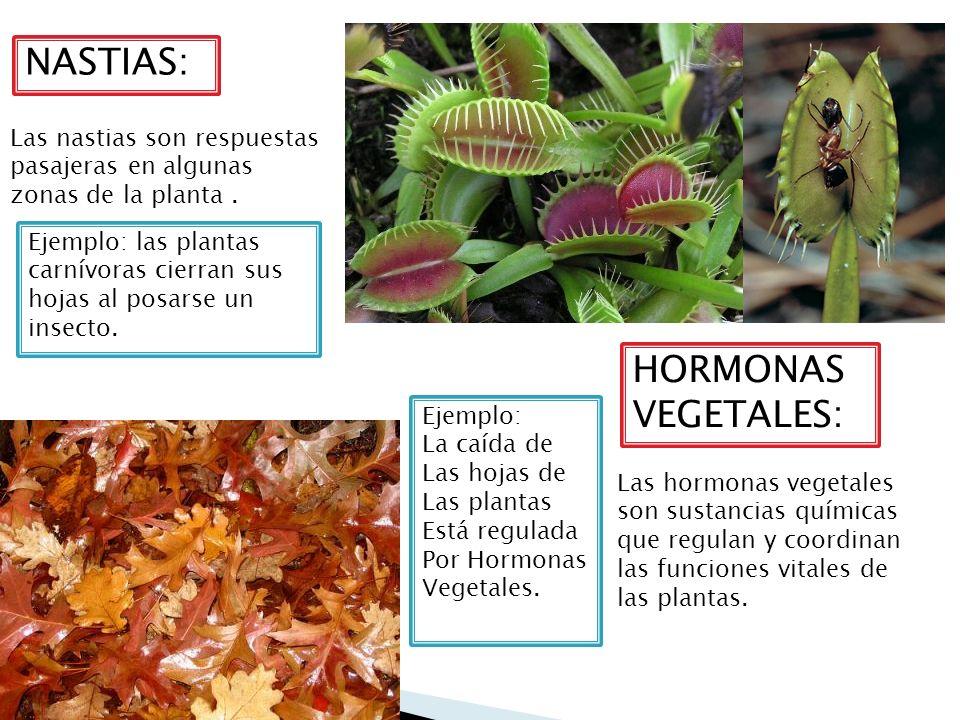 Tema 3 la relaci n y la coordinaci n en los seres vivos for Hormonas en las plantas