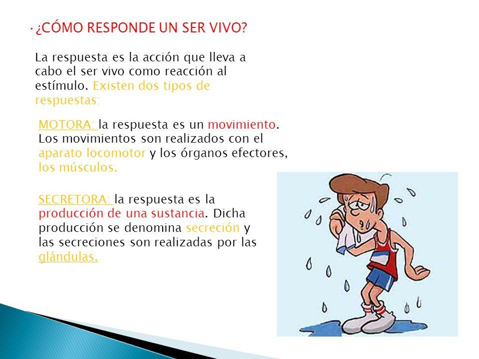·¿CÓMO RESPONDE UN SER VIVO