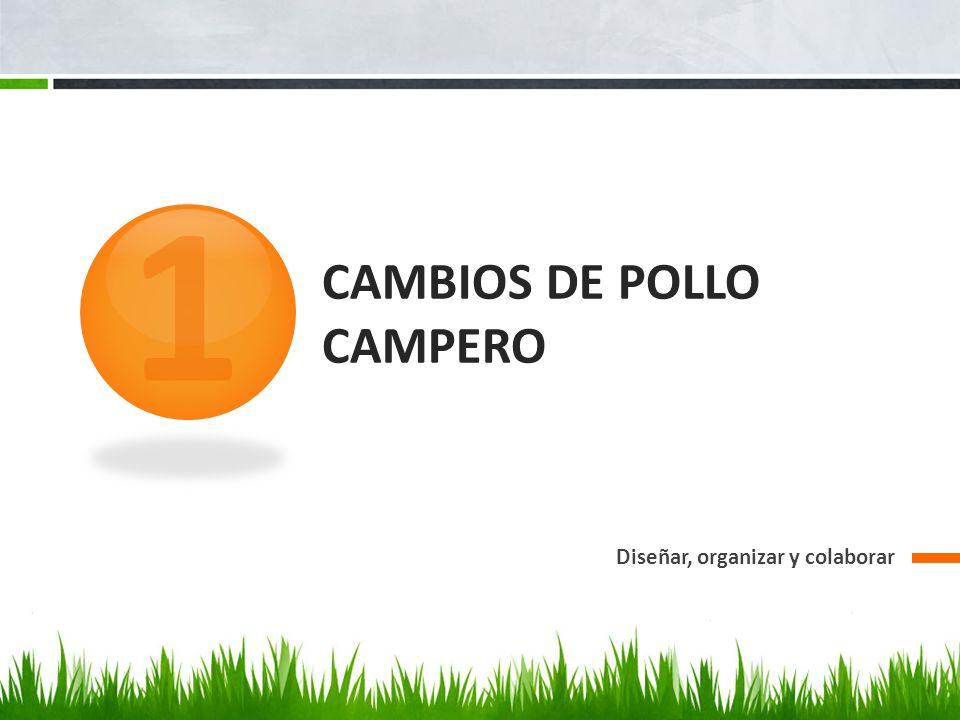 CAMBIOS DE POLLO CAMPERO