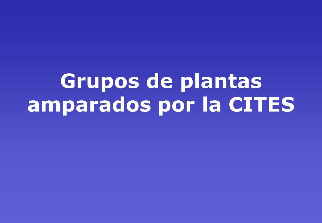 Grupos de plantas amparados por la CITES